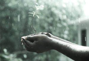 Кто пил дождевую воду, и безопасно ли это делать сейчас?